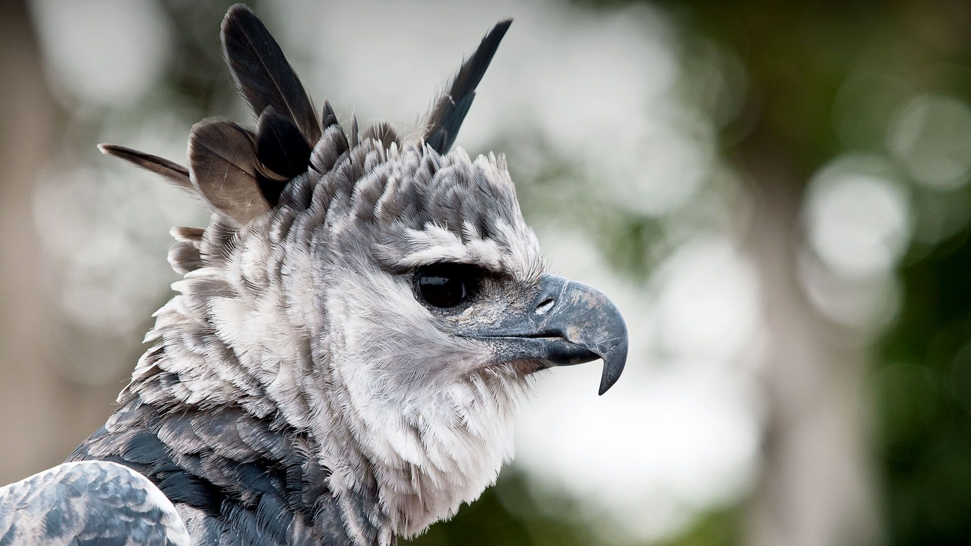 animals_hero_harpy_eagle.jpg